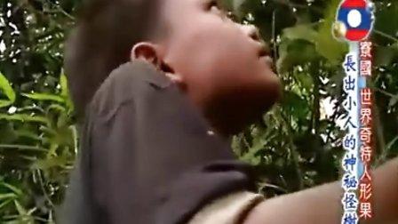 世界第一等长出小人的神秘怪树!?