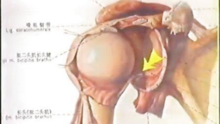 中国骨伤科学(15辑)08躯干骨折二