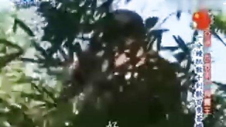 世界第一等20091014象山(亚洲第一捕蝇王)[光速收集]