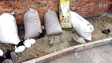 散养的小兔子(惠州河南岸)