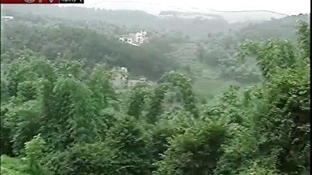 视频: 荣昌气候影响竹笋减产二千吨笋农积极谋来年 100902 午新闻