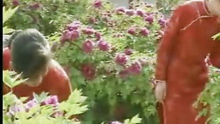 电视风光片《中国牡丹》丝路花开万里香