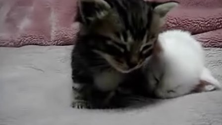 超可爱的小猫咪困得不行要睡觉
