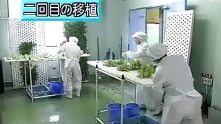 【日本科学技术】蔬菜的高科技生产流程