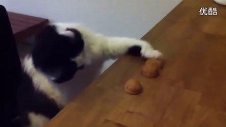 小猫玩猜球