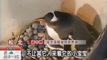 《都市发现》极地小企鹅欢庆冰雪节