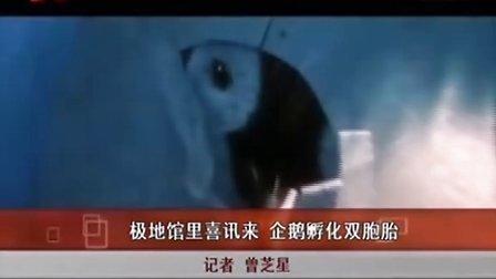 《新闻夜航》极地馆里喜讯来 企鹅孵化双胞胎