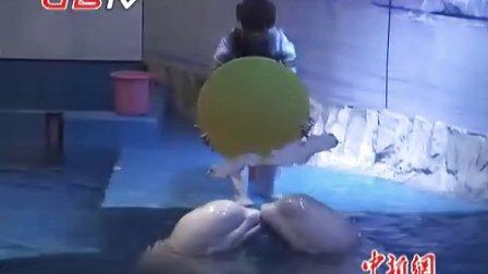 哈尔滨极地馆 白鲸赏月