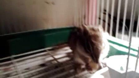 小松鼠吃饼干!!