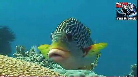 凯恩斯潜水:澳洲大堡礁潜水的视频。海龟和小丑鱼