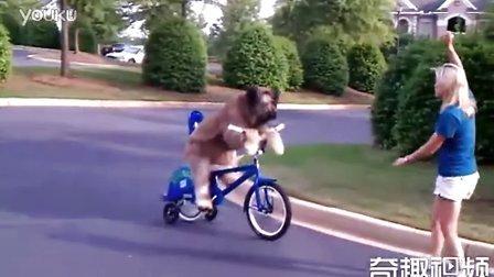汪星人骑自行车...