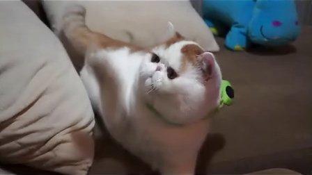 [拍客]青蛙胖王纸