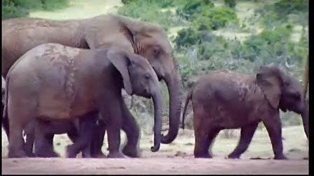 大象,永不忘记