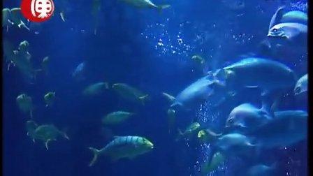 东北网视鳐鱼表演