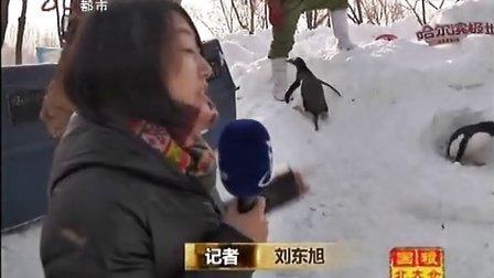黑龙江电视台都市频道《新闻夜航》企鹅出行