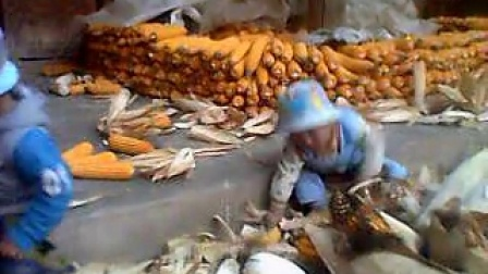 农村的小孩也会剥玉米皮
