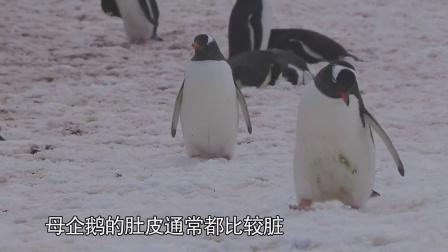 晓片段:绝美大陆南极