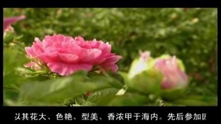 201408市电视台制作牡丹专题片(市委宣传部)