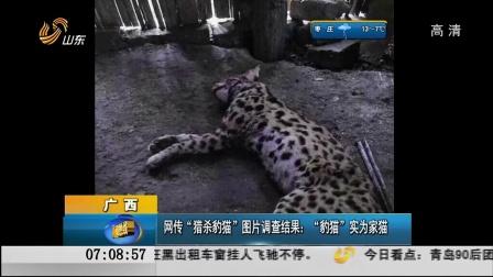 """广西:网传""""猎杀豹猫""""图片调查结果——""""豹猫""""实为家猫[早安山东]"""