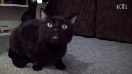 这猫可能比你唱歌都好听