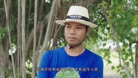 泰国红树林再生项目纪实报告 特别版