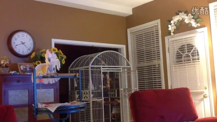 美国北卡罗来纳州一户人家里养了只鹦鹉