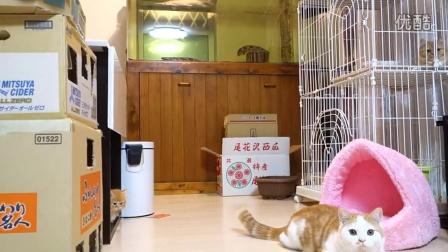 机器人想和猫咪做朋友!!