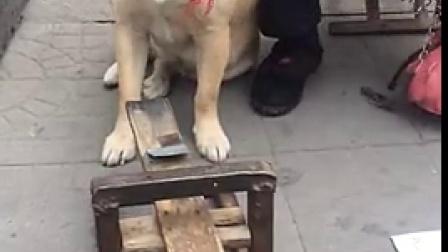 好聪明的狗狗,你发现奥秘了吗?