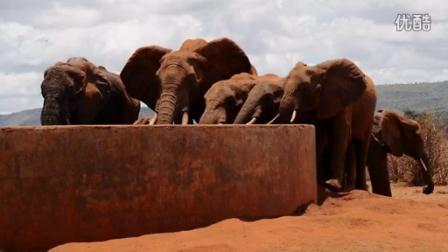 根与芽大象守护者项目宣传片