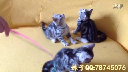 【煊游记】为妹子家的小猫寻找爱心主人