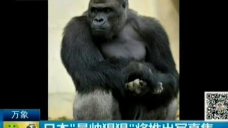 """日本""""最帅猩猩""""将推出写真 150928 通天下"""