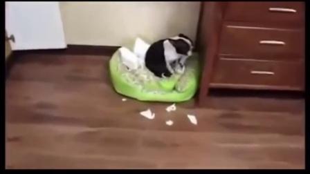 宠物养成记 跟着主人做运动