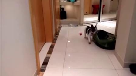 最萌最有趣的猫狗相处时的搞笑片段