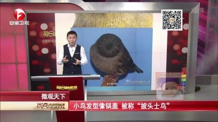 """小鳥發型像鍋蓋  被稱""""披頭士鳥"""" 每日新聞報 151121"""