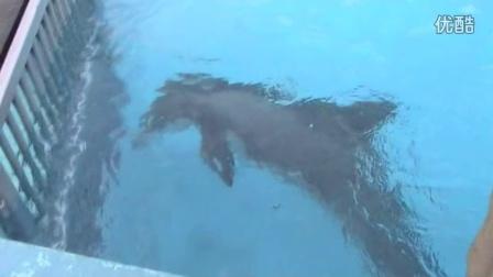 海豚惊人的记忆 Dolphin Memories Last for Decades