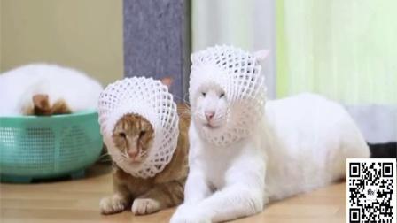 搞笑动物视频合集那些被主人玩坏的猫猫和狗狗