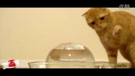 笑死不偿命:可爱!猫咪舌舔冰球的故事