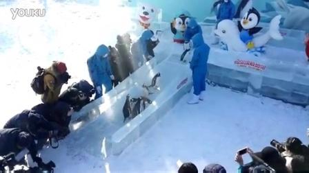 哈尔滨极地馆企鹅打滑梯20160121