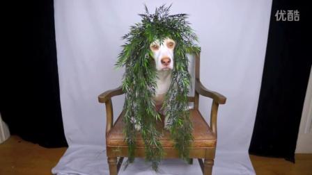 狗狗头顶各种植物