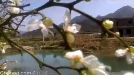 三月葛竹枳实花(福建漳州市南靖县南坑镇葛竹村旅游区)