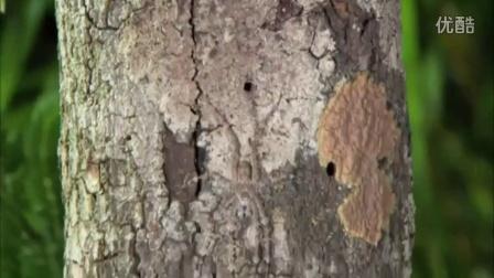 男子手扶树干感觉异常 仔细一看发现让人头皮发麻的生物