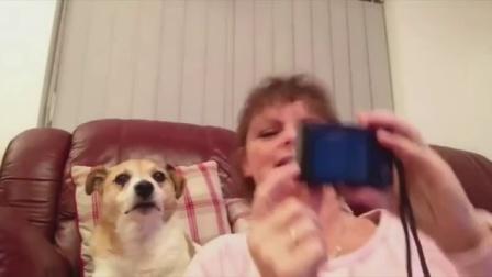 【发现最热视频】很有镜头感啊!一只会自拍的