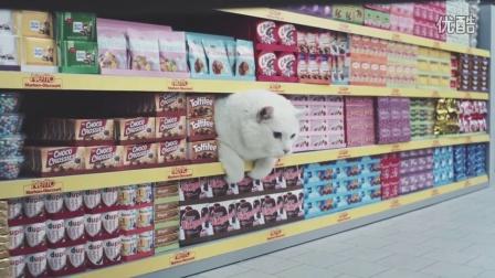 德国一家超市的喵星人广告