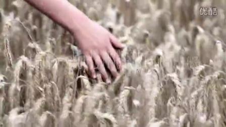 抚摸玉米田的手 视频素材