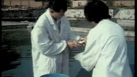 池塘养鱼高产技术 第四集