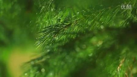 Tree树木