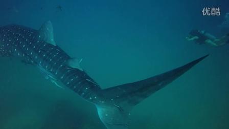 Crystal Dive 涛岛鲸鲨