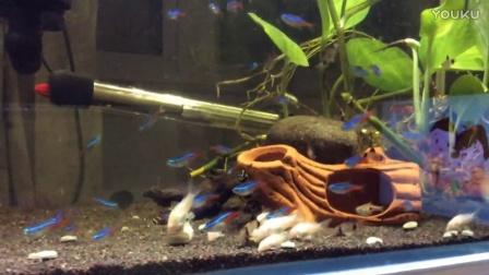 草缸异形红绿灯鼠鱼.MOV