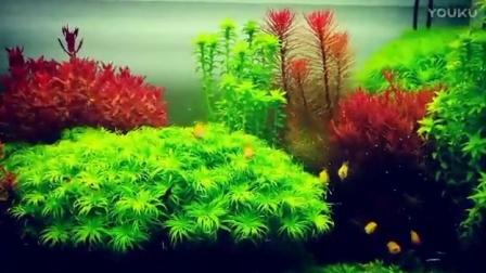 草缸,喜欢荷兰景~草缸~灯鱼~金波子~的欢迎加QQ群562899373