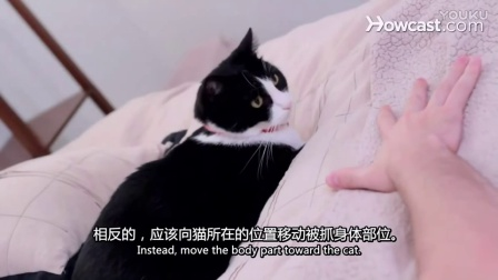 如何避免被猫咬到_#宠物护理# 视频翻译_中英字幕